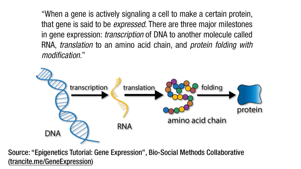 gene-expression-to-proteins
